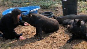Annie and piggies
