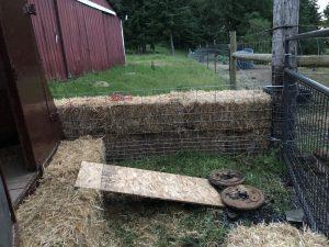 pig chute into trailer