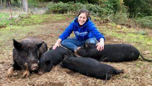 Clare the pig whisperer