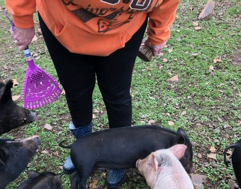 Tammy and piggies