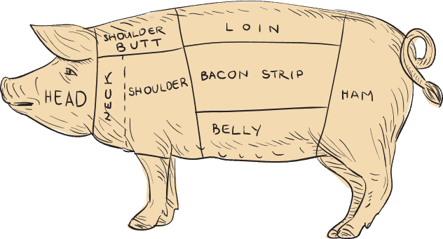 Pork butcher cuts sketch